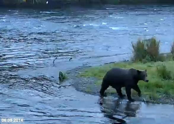 Mum cubs Falls