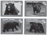 DIVER 1 INFO DIVER CARDS FROM AT THE HEART OF KATMAI