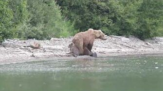 Alaska Bears,Katmai Brooks Camp July 2018, video by Costel Necula