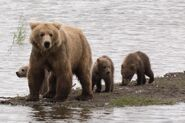 RANGER RUSS COMMENT 2018.07.15 13.38 w PHOTO OF 482 BRETT & 3 SPRING CUBS PIC ONLY