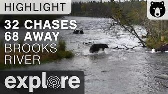 Bear 32 Chases 68 - Katmai National Park - Live Cam Highlight Published September 21, 2017