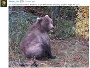 504s FEMALE SUBADULT 2017.09.30 NPS PHOTO RDAVE POSTED 2017.11.09 10.59 w COMMENT