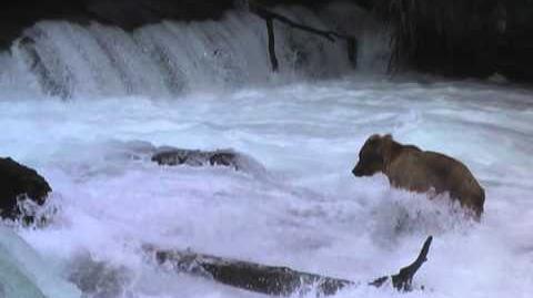 Alaska 20120706 17 Bear cub at Brooks Falls-0