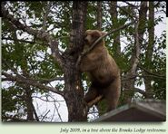 435 HOLLY PIC 2009.06.28 TREED ABOVE BL RESTROOMS in 2012 BoBr iBOOK 01 COURTESY OF RANGER ROY WOOD