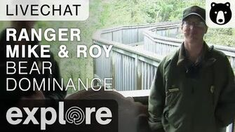 Ranger Roy and Ranger Mike Talk About Bear Dominance - Live Chat, video by Explore