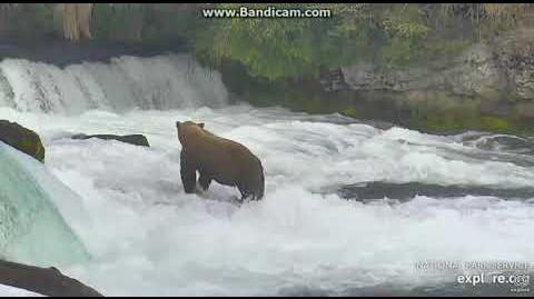 Diver jr 51 at the falls 6 25 18 by Ratna
