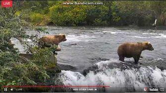 Grazer scares 806 Lipfisher down the falls 9 5 2017, video by Ratna Narayan