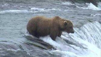 Bear Cam - Brooks Falls Cam 07-15-2017 09 00 07 - 09 59 58