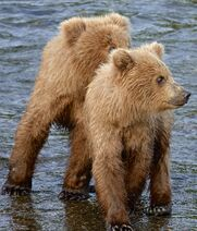 NOSTRIL BEAR 813 PIC 2019.07.05 20.56 2 YEARLINGS ONLY TRUMAN EVERTS POSTED 2019.12.09 03.21