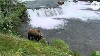 8 38pm 070816 505 and 775 on lip Katmai National Park and Explore by Mickey Williams