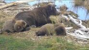 BEADNOSE 409 PIC 2016.xx.xx w CUBS 909 & 910 GREENRIVER POSTED 2020.01.12 08.37 01