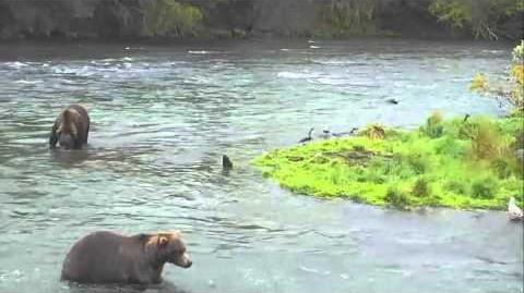 Brooks Falls - Katmai National Park, Alaska Cam 09-15-2015 12 46 11 - 12 51 07