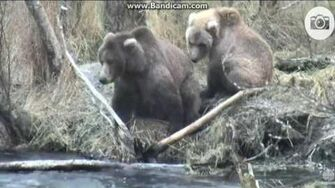 708 and cubs P3 Oct 16, 2016 by Ratna