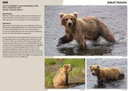 608 INFO 2015 BoBr PAGE 90