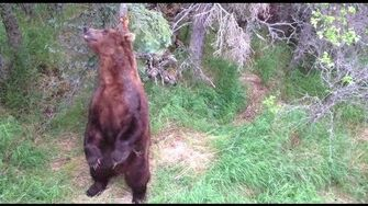 Alaska 2013, video by Justin Gibson