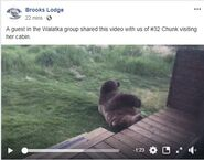 INFO BEARS SEEN 2019.06.02 23.30 BL FB 2019.06.03 13.10 FB POST w VIDEO OF 32 CHUNK