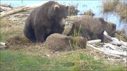 BEADNOSE 409 PIC 2016.xx.xx w CUBS 909 & 910 GREENRIVER POSTED 2020.01.12 14.51 06
