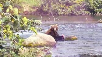 Bear 812 (Created with @Magisto), 2019 season video by GreenRiver