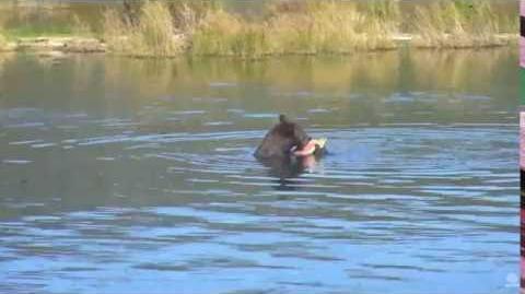 09.01.2016 - Bear 879 video by Brenda D