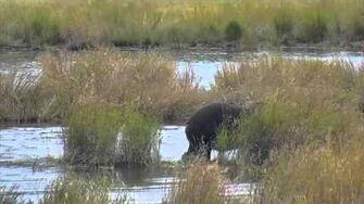 Lower River - Katmai National Park, Alaska Cam 09-04-2015 09 11 39 - 09 16 36 Explore Recorder video