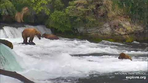 06.30.2018 - 274, 151 Walker and 755 Scare D Bear in the Far Pool by Brenda D