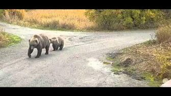 Here they come! Mom and velcro September 28, 2015 video by Juanita Roper (aka BirdyGirly)-0