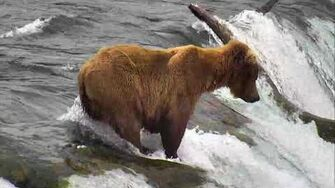 Brooks Falls Brown Bears Cam 06-29-2018 13 14 18 - 14 14 19 Explore Recorder video