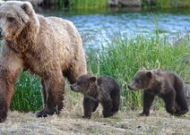 171 PIC 2019.07.02 22.37 w 2 SPRING CUBS 04 TRUMAN EVERTS POSTED 2019.12.07 04.23