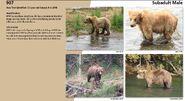907 2019 Bear Book p 32