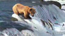 ?804 July 1, 2020 snapshot by bearskibear1 .04