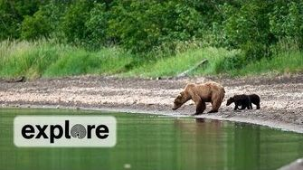 Bear Cub Slips Over Brooks Falls, 11 5 2013 or earlier video by Explore