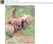 NOSTRIL BEAR 813 PIC 2015.07.22 HER 2 REMAINING YEARLINGS MOCHA POSTED 2016.05.18 16.24 w COMMENT