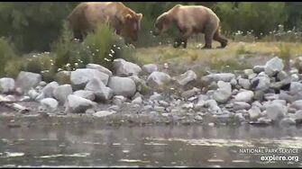 Bear 812 charged Bear 901 LR Brooks Falls Katmai June 27, 2020, video by Erum Chad