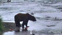 Mane Bear June 29, 2020 snapshot by kcanada .05
