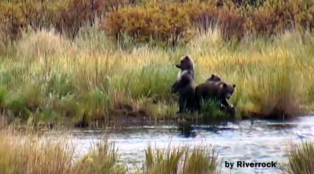 Riverrock cubs LR