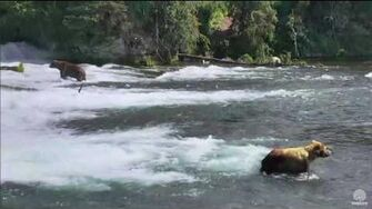 12 5? pm 747 tries to steal 410's fish 89 backpack moves to J Katmai National Park and Explore by Mickey Williams-0