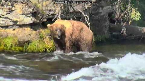 06.29.2016 - 755 Scare D Bear, 83 Wayne Brother video by Brenda D