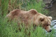 WHO UNIDENTIFIED SOW 2019.07.xx w 2 SPRING CUBS 39 500 MAYBE LOVETHEBEARS POSTED 2020.01.28 08.56 01