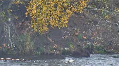 09.28.2017 - 32 Chunk Follows 474 Down River video by Brenda D