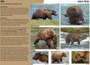 856 INFO 2015 BoBr PAGE 68
