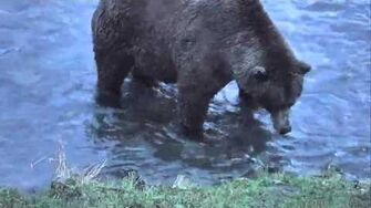 Brooks Falls - Katmai National Park, Alaska Cam 10-15-2015 20 30 58 - 20 35 55 Explore Recorder