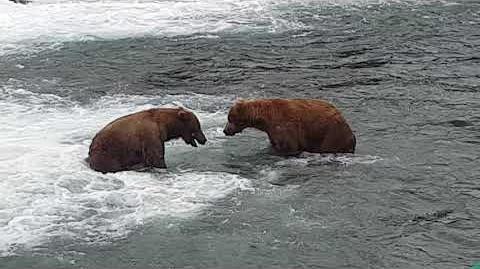 Katmai National Park 10 July 2018 by Mike Weagley