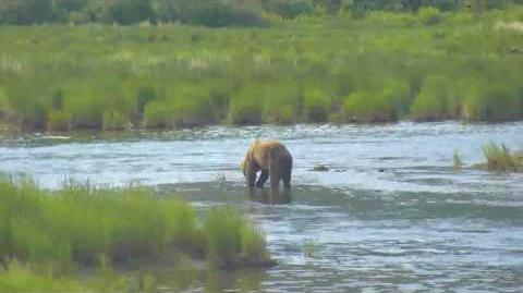 07.05.2017 - 480 Otis makes his Debut in the Lower River video by Brenda D