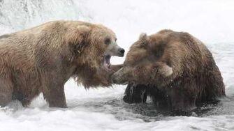 Katmai National Park 2011 by IndianaStateU