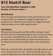 NOSTRIL BEAR 813 INFO 2015 BoBr PAGE 46 INFO ONLY