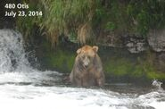 OTIS 480 PIC 2014.07.23 NPS PHOTO 2014 FAT BEAR CONTEST