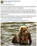 410 INFO 2015.07.23 KNP&P FACEBOOK POST BEARCAM BEAR PROFILE 410