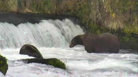 Brooks Falls - Katmai National Park, Alaska Cam 09-16-2016 19 00 01 - 19 59 59