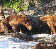 SNAGGLETOOTH 247 PIC 2006.07.xx 247 RIGHT w 864 LEFT NPS PHOTO 2014 BoBr PG 67 864s