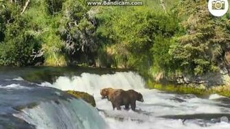 Awesome! 747 clears the falls but allows 410 to come off the falls and stand close to him by Ratna June 27, 2016-0